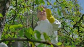Bonde som besprutar träd med kemikalieer i fruktträdgård stock video