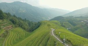 Bonde som går vidare Longji ris terrasserade fält arkivfilmer