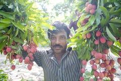 Bonde som håller nya litchiplommoner och upp till bunding försäljning i lokal marknad på ranisonkoil som är thakurgoan, Banglades Arkivfoto