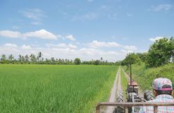Bonde som kör lastbilen för ` s för lantgårdtraktor eller bondetill och med grön ung risfält på älskvärd tropisk solig dag med bl royaltyfri foto