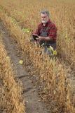 Bonde som kontrollerar fältet för sojabönabönaväxter royaltyfria foton