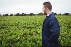 Bonde som kontrollerar hans skördar i fältet Arkivbild