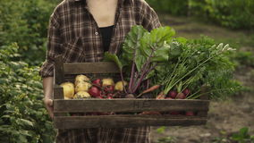 Bonde som mycket rymmer träasken av nya organiska grönsaker, potatis, morötter, tomat, beta, rädisa på ecolantgård stock video