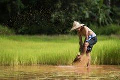 Bonde som planterar ris i den regniga säsongen Royaltyfri Fotografi