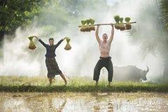 Bonde som planterar ris i den regniga säsongen Royaltyfria Foton