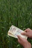 Bonde som räknar indiska pengar i den frodiga gröna vetelantgården, symbol av välstånd Royaltyfri Bild