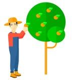 Bonde som samlar apelsiner Arkivbild