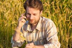 Bonde som talar på mobiltelefonen, medan placera på vetefält royaltyfria bilder