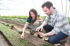 Bonde som undervisar ny anställd till att arbeta i trädgården Arkivbilder