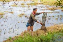 Bonde Thailand för livstil thai bönder är fiskfälla i risfältfält Arkivfoto