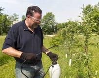 Bonde Using en organisk sprej på några Apple träd Royaltyfri Fotografi