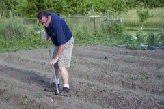 Bonde Weeding His Garden med en hacka Royaltyfria Bilder