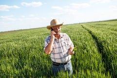 Bondeanseende i ett vetefält och samtal på telefonen royaltyfria foton