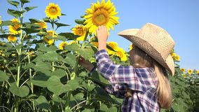 Bondebarn i solrosfält, flicka som studerar att spela i den agrariska skörden 4K