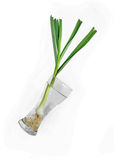 Bonded spring onion in front Stock Image