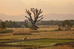 Bondeflicka i norr Thailand Royaltyfri Bild