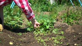 Bondehänder, närbild Bonde som arbetar på jordbruksmark på den soliga dagen lager videofilmer