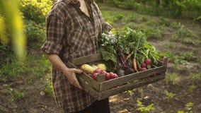 Bondehänder som mycket rymmer träasken av nya organiska grönsaker, potatis, morötter, tomat, beta, rädisa på ecolantgård arkivfilmer