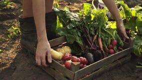 Bondehänder som mycket rymmer träasken av nya organiska grönsaker, potatis, morötter, tomat, beta, rädisa stock video
