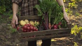 Bondehänder som mycket rymmer träasken av nya organiska grönsaker, potatis, morötter, tomat, beta, rädisa arkivfilmer