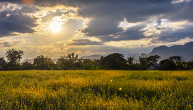 Bondehus med det Sunn hampafältet på skymning Royaltyfri Fotografi
