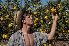 Bondeklocka en citron royaltyfria foton