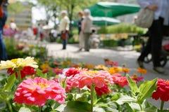 bondemarknad i en stad Royaltyfri Fotografi