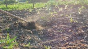 Bonden arbetar på ett land Gräva hål med trädgårdhackan Torr jordning och damm från det Jordbruks- hjälpmedel i fältet lager videofilmer