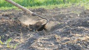 Bonden arbetar på ett land Gräva hål med trädgårdhackan Torr jordning och damm från det Jordbruks- hjälpmedel i fältet arkivfilmer