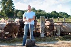 Bonden arbetar på lantgård med mejerikor Royaltyfri Fotografi