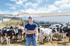 Bonden arbetar på lantgård med mejerikor Royaltyfria Bilder