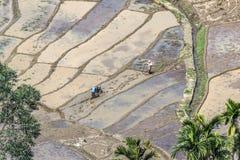 Bonden arbetar på risfält i terracced fält Arkivbild