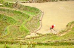 Bonden arbetar på risfälten Royaltyfria Bilder