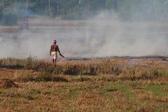 Bonden bränner de skördade risfälten royaltyfria foton