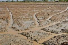 Bonden förbereder området för odlar rice. Royaltyfri Foto