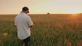 Bonden går vetefältet, ser spikeletsna Bakre sikt på solnedgången Steadicam ultrarapidskott arkivfilmer