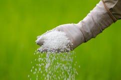 Bonden häller chemical gödningsmedel Arkivfoton