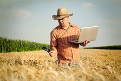 Bonden kontrollerar vetekornet i fältet fotografering för bildbyråer
