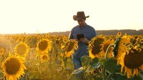 Bonden med minnestavlan kontrollerar att blomma av solrosor en agronomman går över fält av solrosor med en minnestavla in stock video