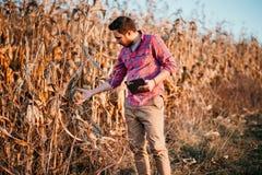 bonden med skägget som kontrollerar havre, konserverar att skörda Folk i åkerbrukt fält royaltyfri bild