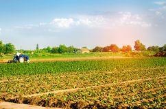Bonden odlar fältet med en traktor Jordbruk grönsaker, organiska jordbruksprodukter, agro-bransch jordbruksmarker royaltyfri foto