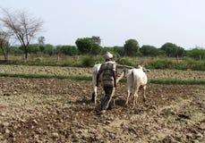 Bonden som plogar jordbruksmarken, utkast slogg område, satnaen, MP, Indien royaltyfria foton