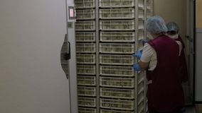 Bonden sorterar nyfödda ankungar lager videofilmer