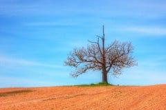 Bondes träd Royaltyfri Foto