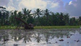 Bondes traktor för att odla fältet, innan att plantera ris på en risfält Fältet täckas med lerigt vatten lager videofilmer