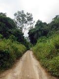 Bondes väg i grönt land runt om Semuc Champey Arkivfoton