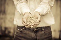 BondeShowing Animal Dry mat Royaltyfri Fotografi