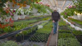 BondeSpraying Insecticide On växter arkivfilmer