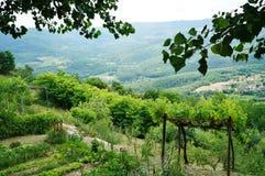 Bondeträdgård på Motovun, Istria, Kroatien, Europa arkivfoto