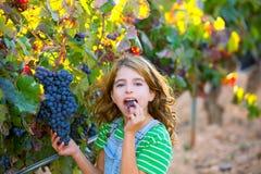 Bondeungeflicka i vingård som äter druvan i medelhavs- höst Royaltyfria Bilder
